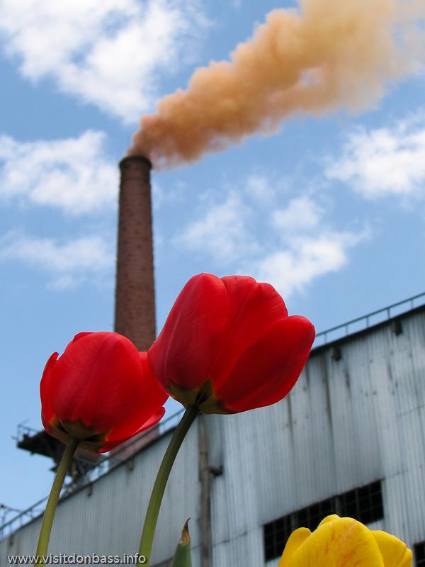 Тюльпаны около мартеновского цеха металлургического завода Донецксталь
