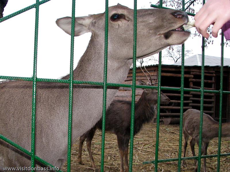Зоопарк Деревня Вашуры в Мариуполе