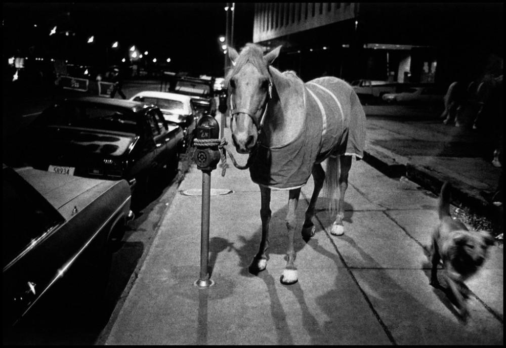 NYC19832