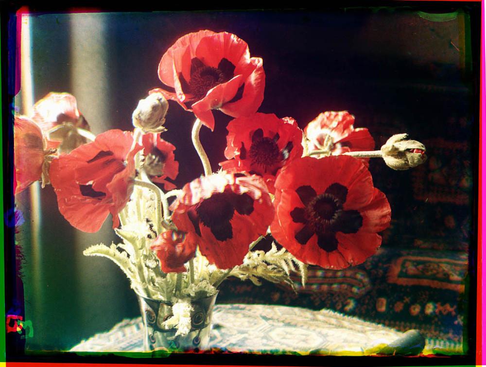 Stilleven met bloemen van de papaver in een vaas
