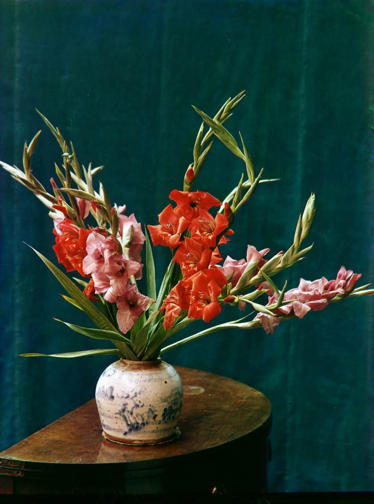 Stilleven met roze en rode gladiolen in een vaas