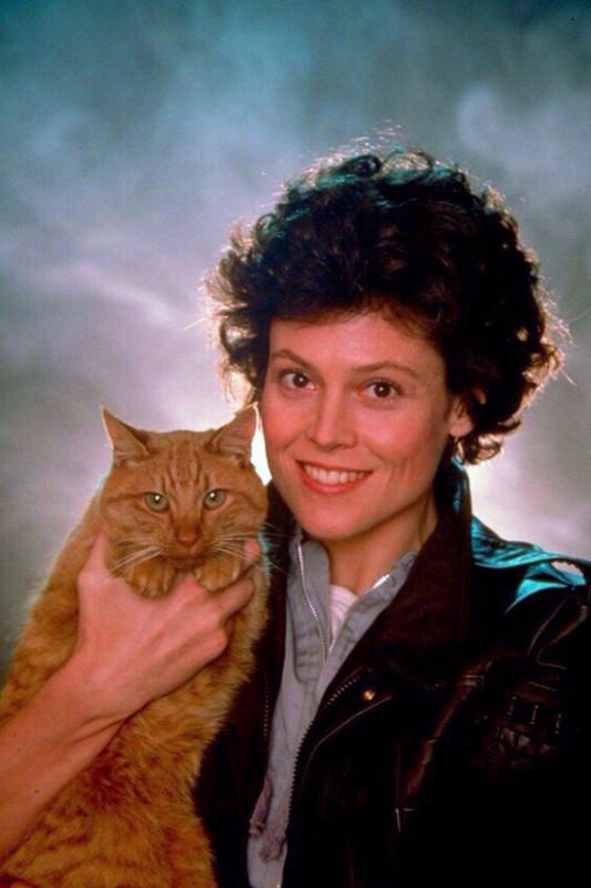 Сигурни Уивер и кот на промо фотографиях к фильму Чужой, 1979 год
