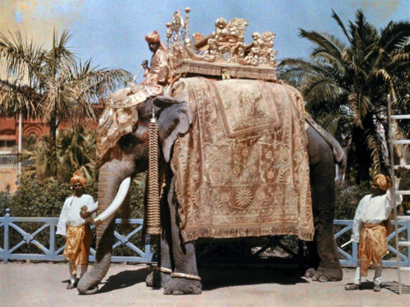 1929 Indian Royal Elephant by Franklin Price Knott
