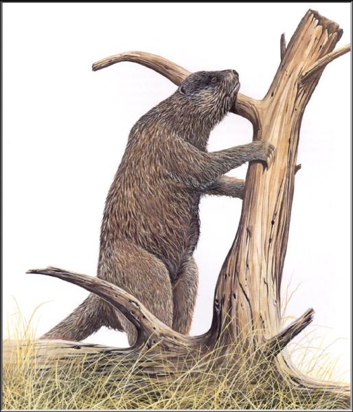 Наземный ленивец Megalocnus