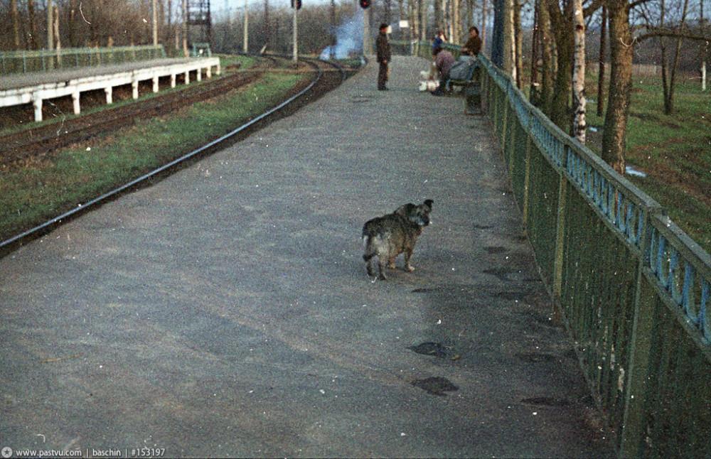 78. Платформа Ромашково. Начало 80-х годов.