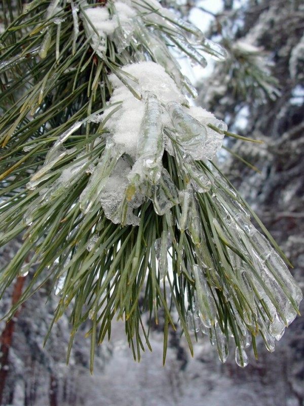 Что такое ледяной дождь ?