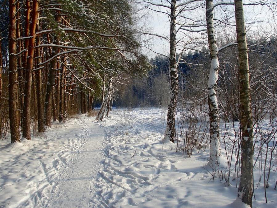 Несколько зимних фотографий