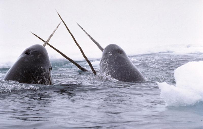 Морской уникум
