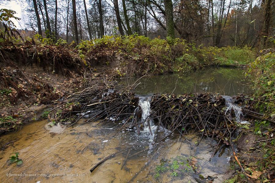 Как сделать запруду в реке