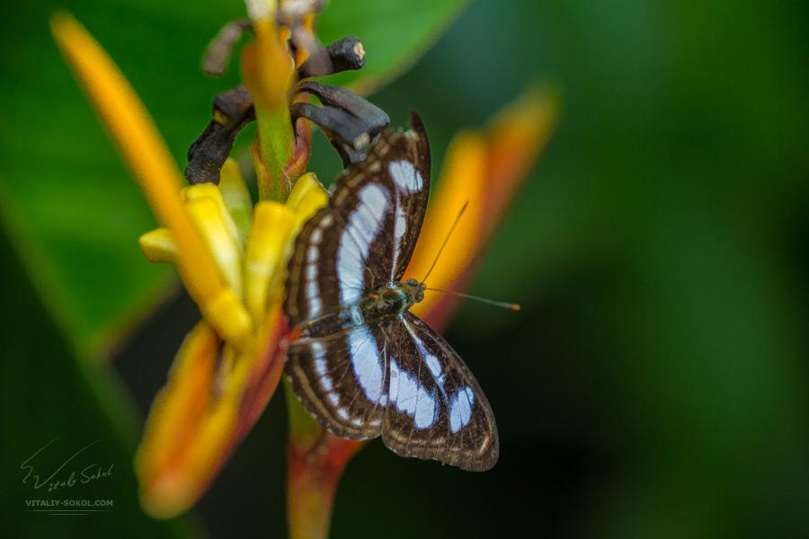 Тропическая бабочка на цветах. Макроснимок