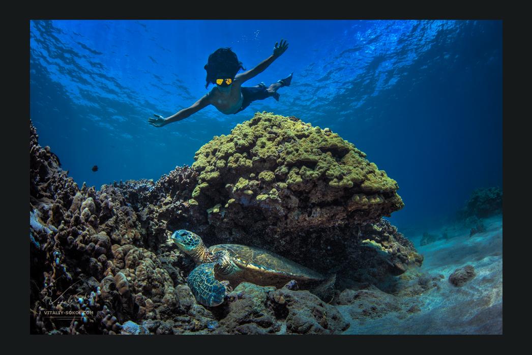 Ныряльщик над большой черепахой сидящей в коралловом рифе