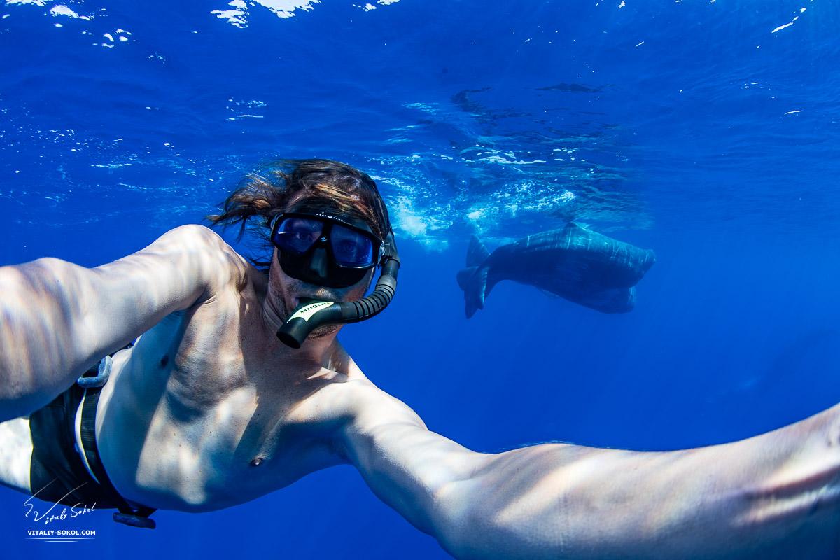 Underwater Selfie with spermwhales underwater