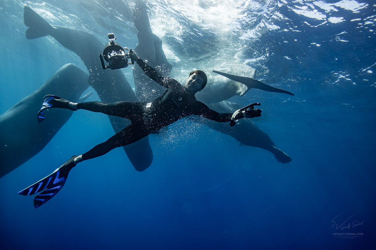 Underwater adventures with spermwhales. An underwater photographer posing with group of spermwhales