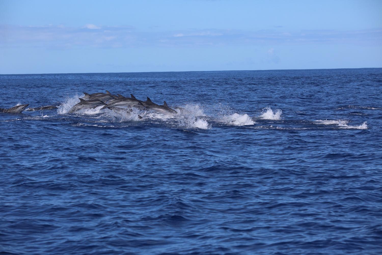 Стая дельфинов выпрыгивает из воды