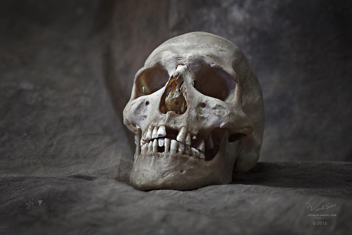www.shutterstock.com/ru/pic-515041705/stock-photo-human-female-skull-closeup-detailed-portrait-high-resolution-fifty-megapixels-image.html