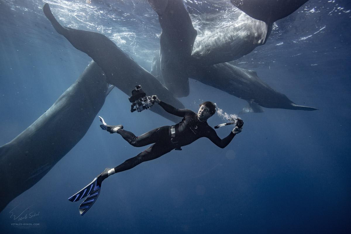 Селфи с кашалотами под водой. Подводные приключения и поиски китов