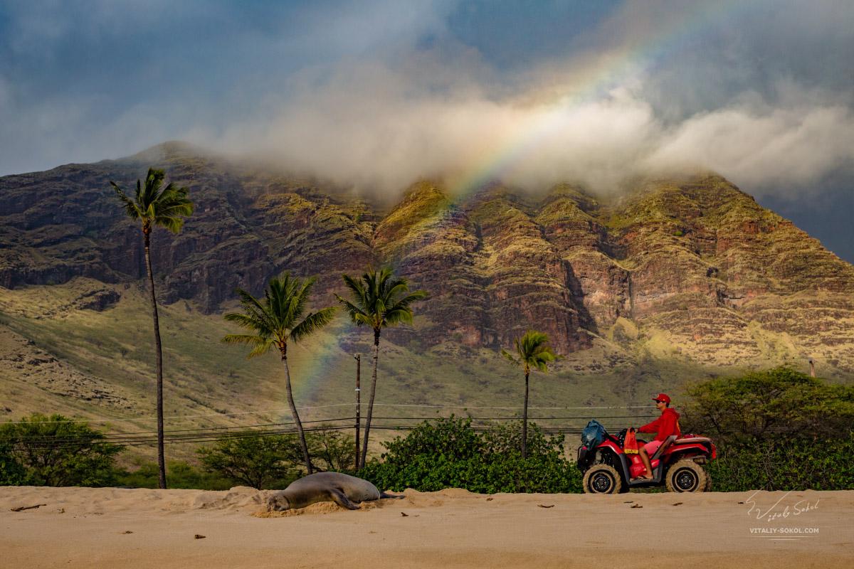 Тюлень монах на гавайском пляже под радугой