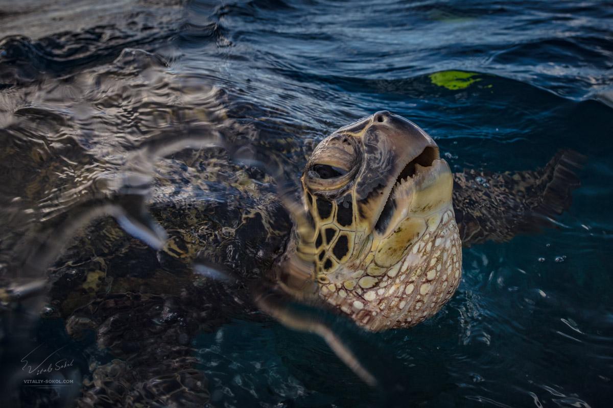 Морская черепаха в воде крупным планом