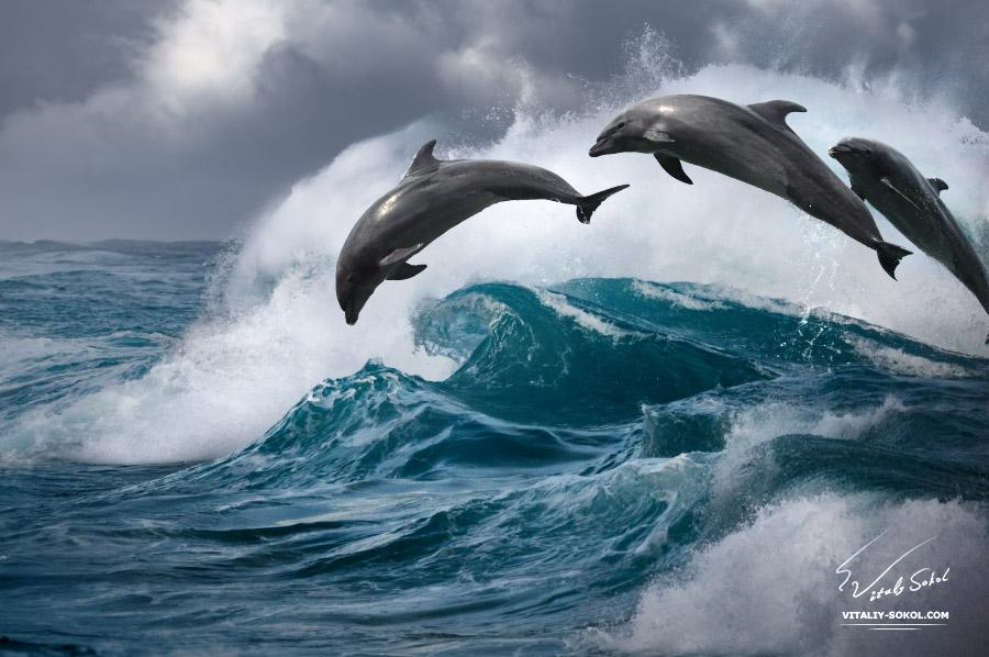 стая дельфинов в океане прыгающих через волны