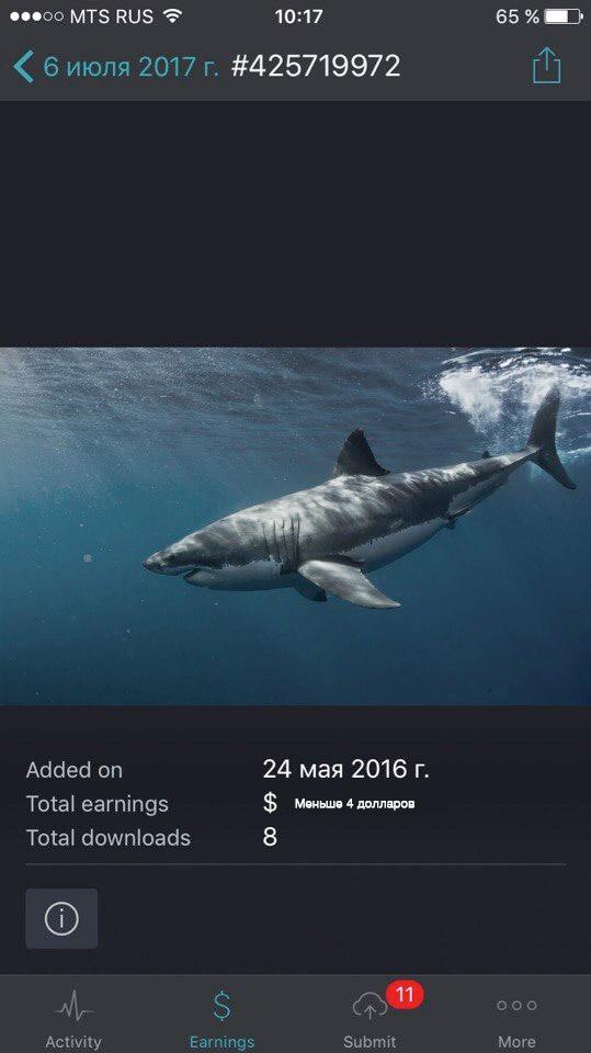 Большая белая акула. Underwater photo of Great White shark