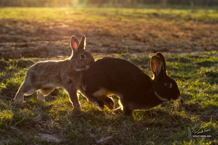 Rabbits in sunshine