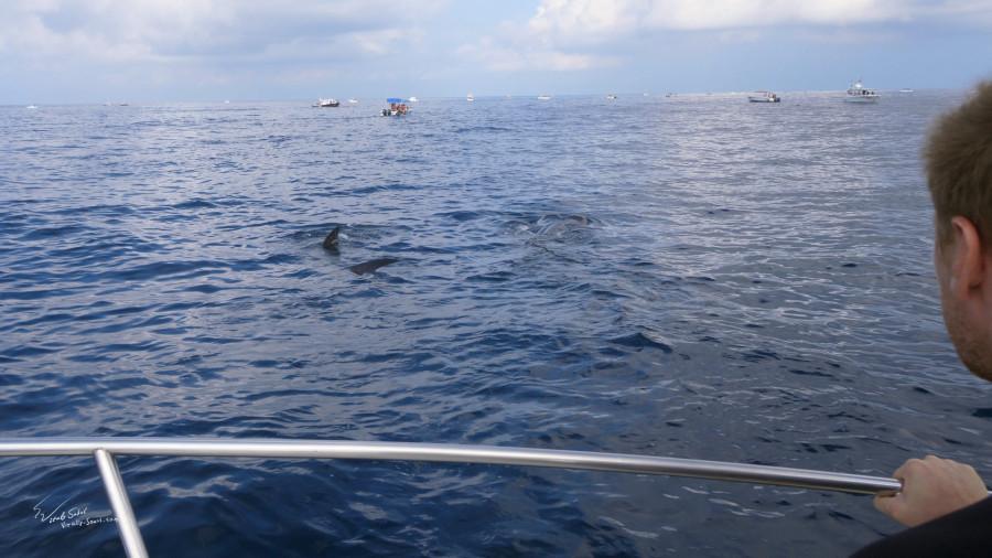 Whale shark photo by Vitaly Sokol aka Will Falcon