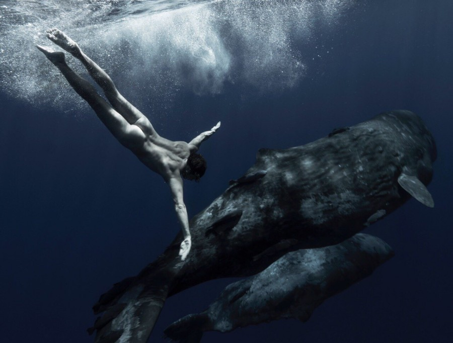 Spermwhales and naked man underwater, Will Falcon with whales by Natalie Karpushenko