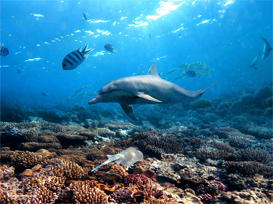 картинки морских жителей дельфины вносят