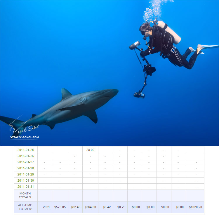 Diver with photo equipment and grey reef shark in front of each other