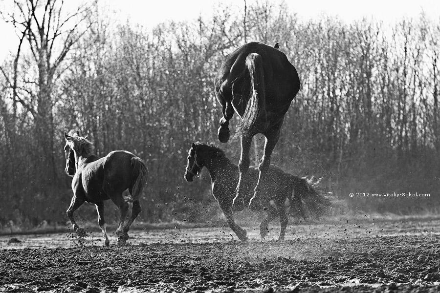 horses spring