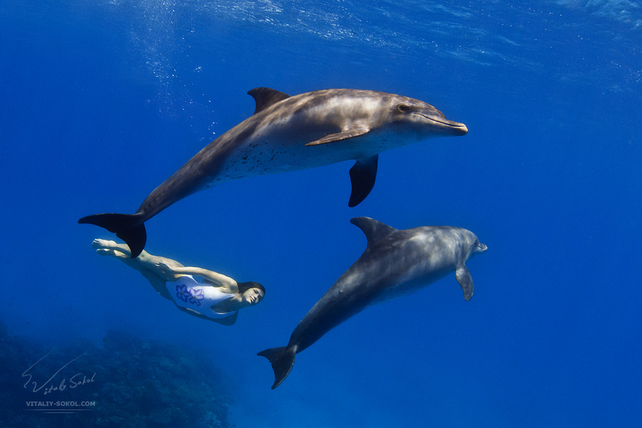 a girl underwater with wild dolphins