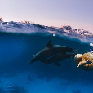 A Blonde diving with wild dolphins
