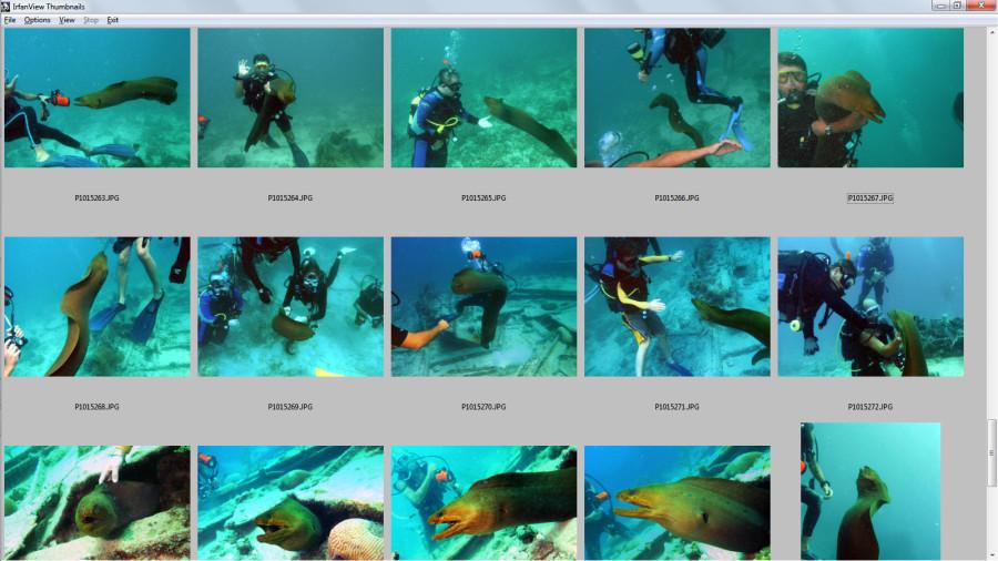 cuba-moray-eel