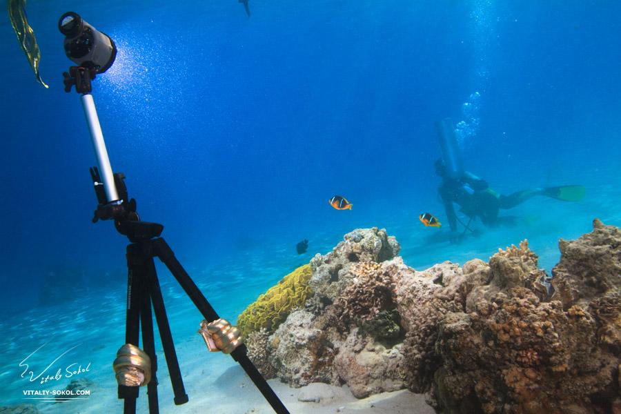 правила подводной фотосъемки сука корсете оголила