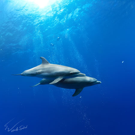 a pair of dolphins underwater