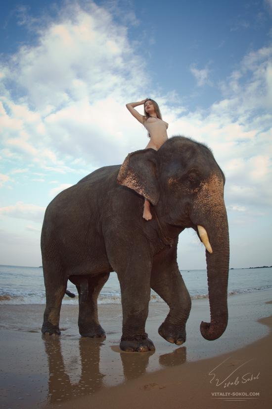 beauty nude wild. Elephant and model