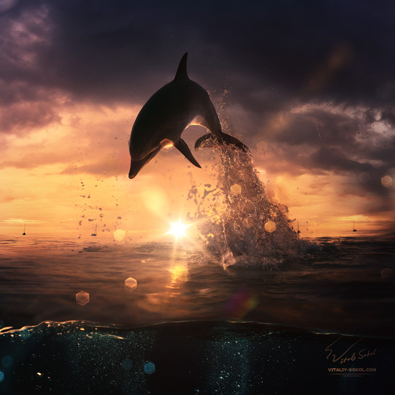 beautiful-sunset-dolphin-jumping-from-ocean