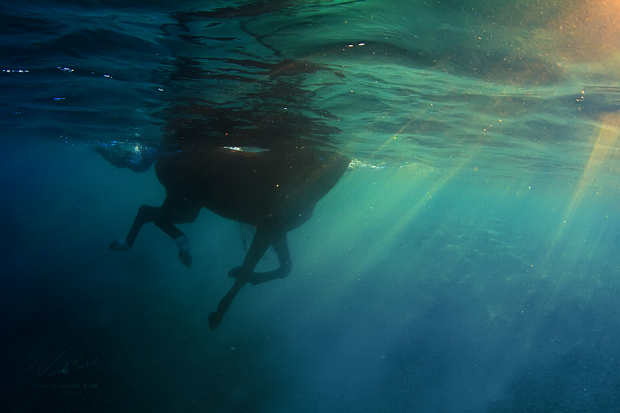underwater horse and naked model