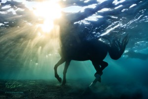 Beautiful underwater horse with sunrays through water surface by Vitaliy Sokol