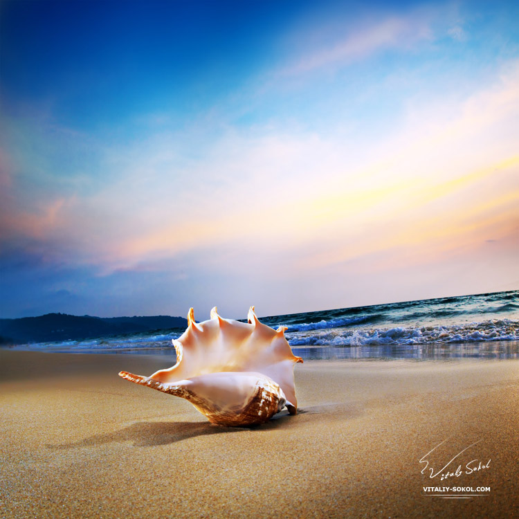 Tropical ocean paradise. Design postcard. Sandy beach with seashell of lambis truncata giant mollusk on shorebreak line.