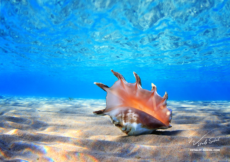 seashell underwater