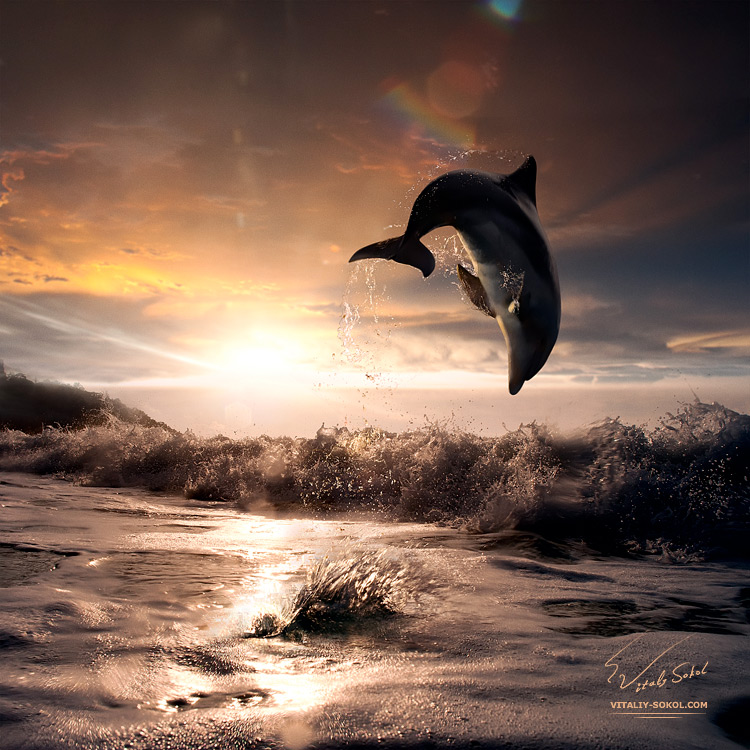 beautiful-sunset-and-dolphin-leaping-out-trough-sea-foam by Vitaliy Sokol