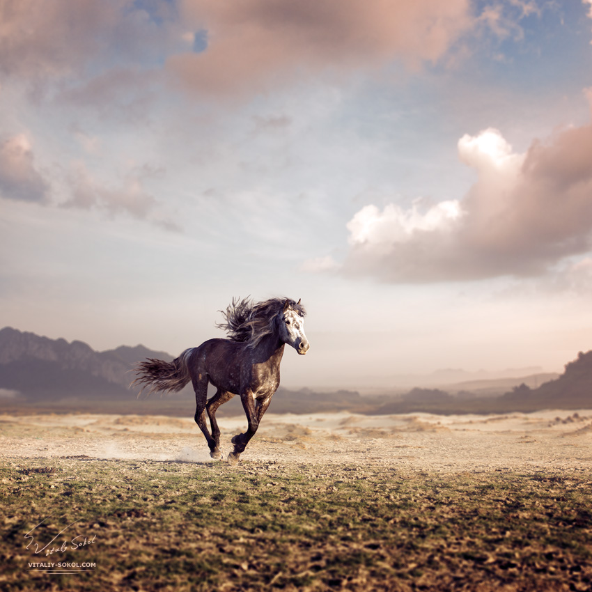 Running horse with streamed mane in a beautiful valley at sunset time