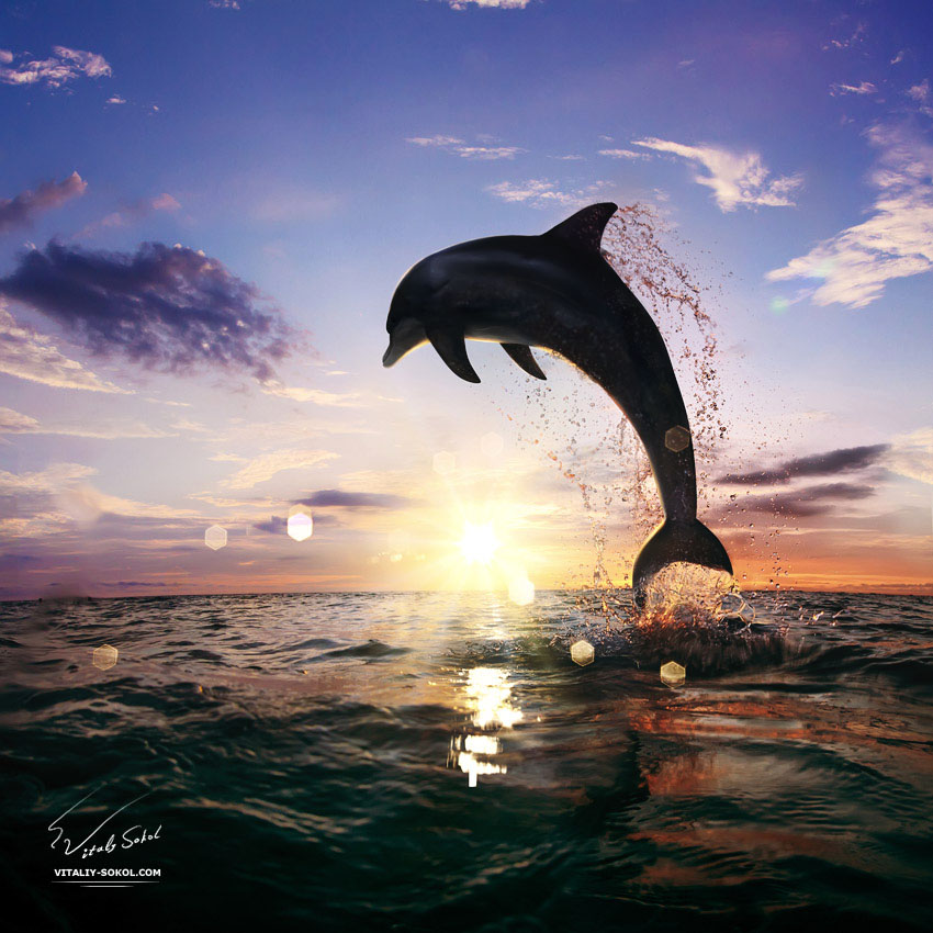 beautiful-sunset-dolphin-jumping-130814
