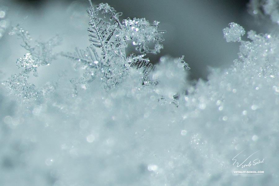 macro-snow-01