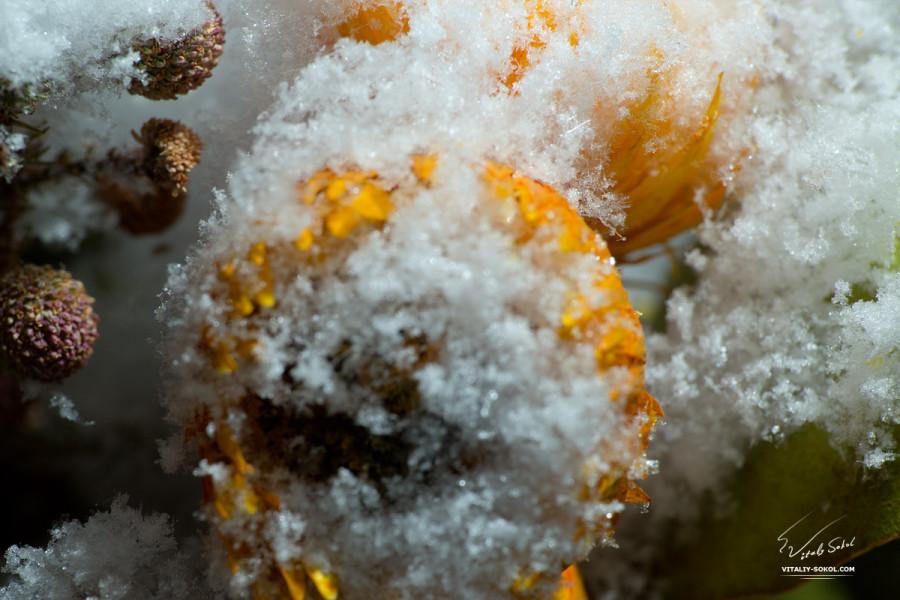 macro-snow-flowers-01
