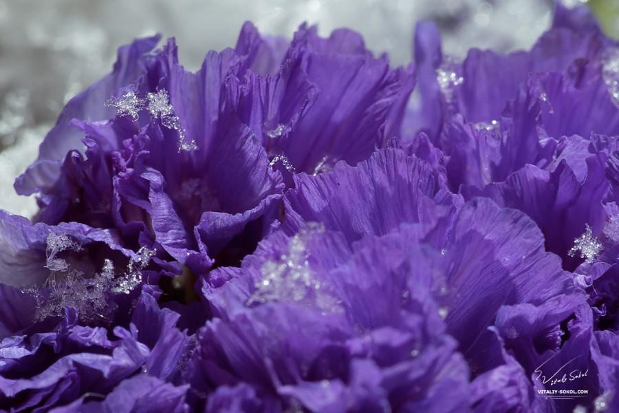macro-snow-flowers-02