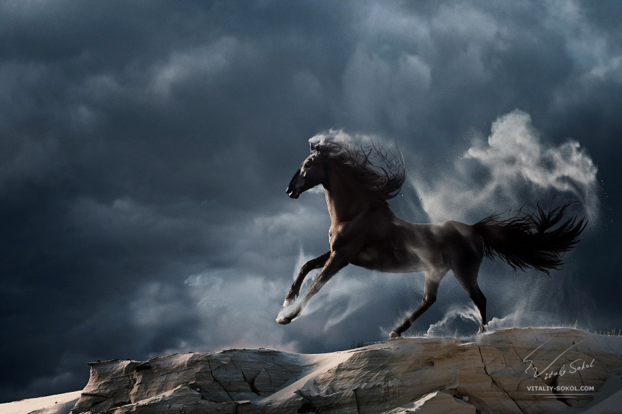 Running horse in front of stormly slouds with dust and sand