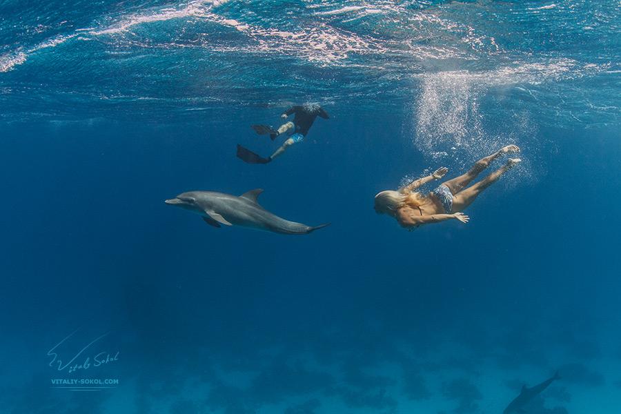 Girl chasing dolfins underwater