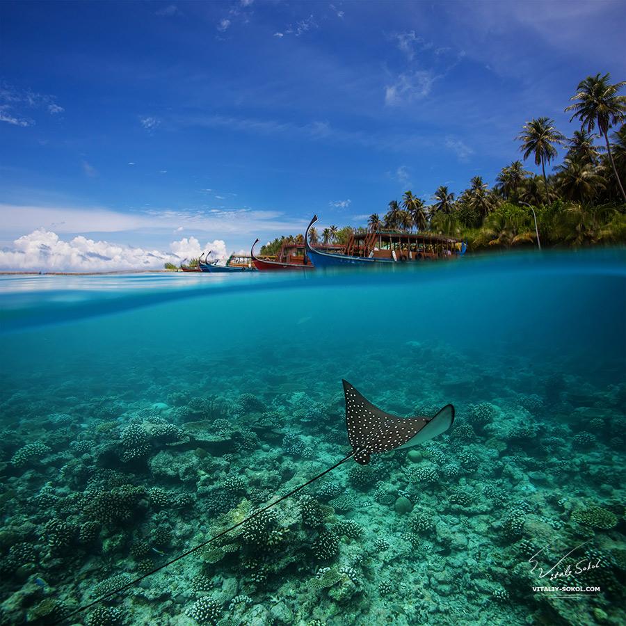Ocean Life Marine Animals Postcard. Maldivian Paradise for divers